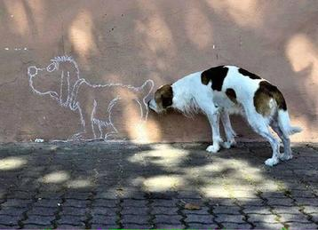 Dog sniffing chalk butt.jpg